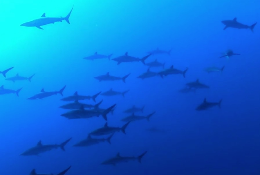 Shark Island.