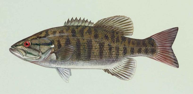fish-387153_960_720