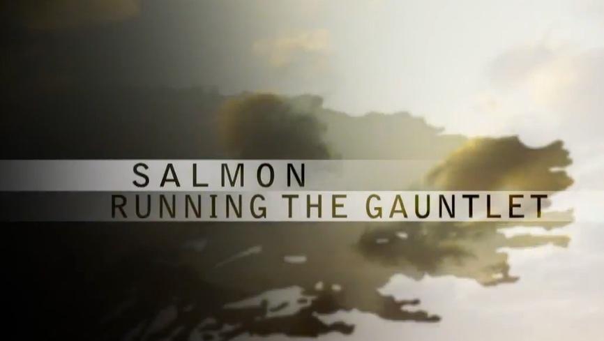 running-the-guntlet